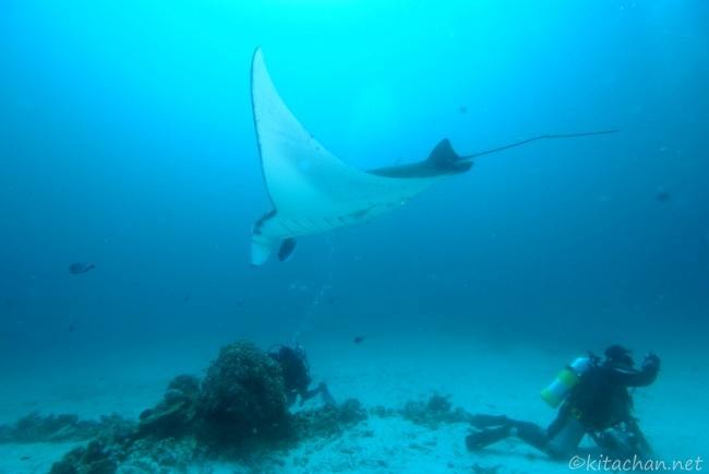 Manta Ray and Kitachan Photo by Lisa Collins