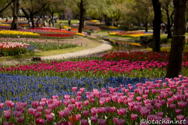 [Photolog] 2012年4月 昭和記念公園のチューリップ