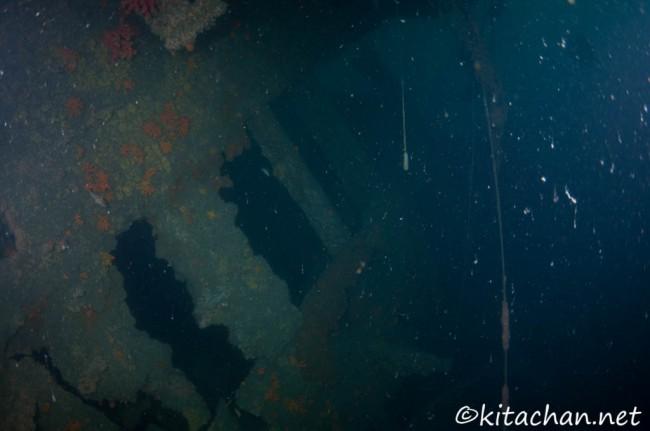 第2回戦艦陸奥レックダイビング@瀬戸内海柱島沖