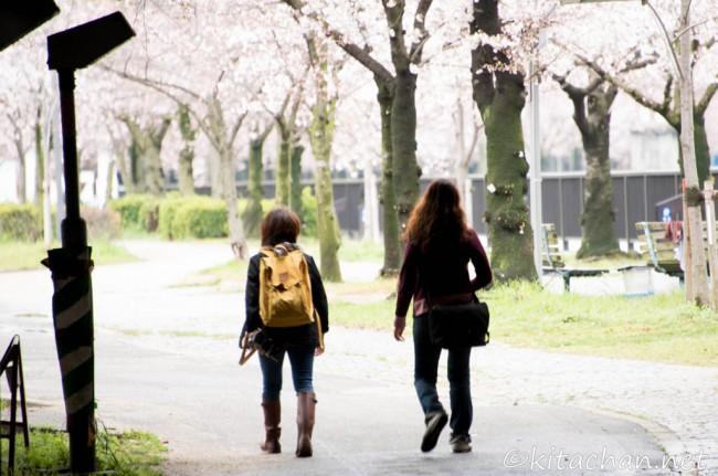 [Photolog] 2014年3月 毛馬桜之宮公園・大阪城公園の桜