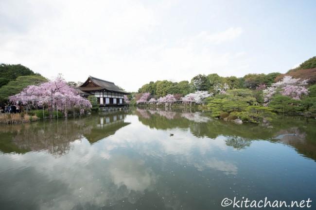 [Photolog] 2014年4月 京都の枝垂桜