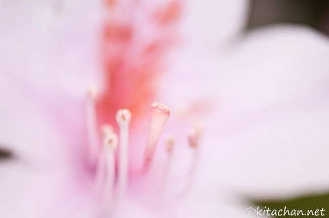 [Photolog] 2011年3月 石垣島バンナ公園の聖紫花