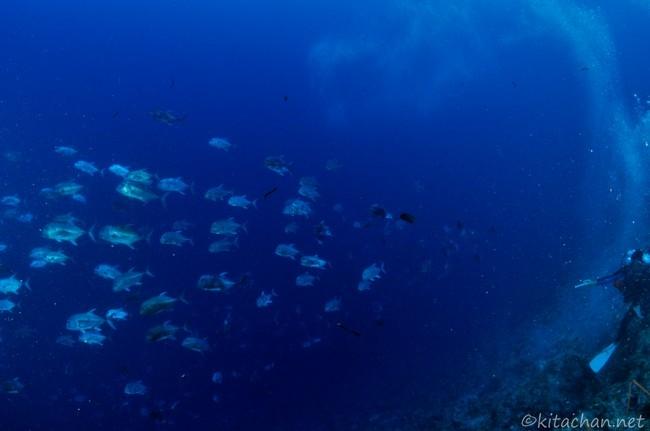 井田齊先生のお魚教室@パラオ