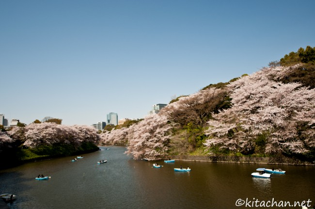 [Photolog] 2011年4月 千鳥ヶ淵・靖国神社・新宿御苑の染井吉野