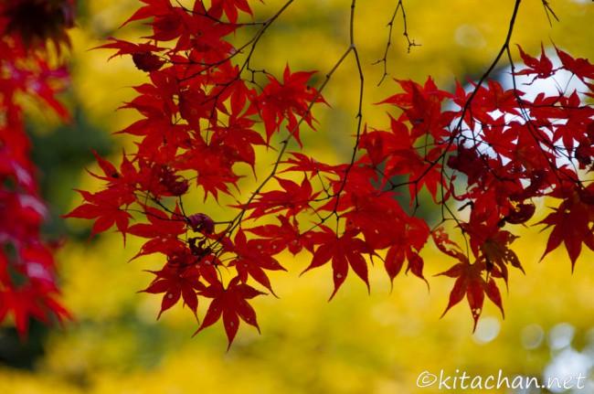 [Photolog] 2014年11月 岩国紅葉谷公園の紅葉