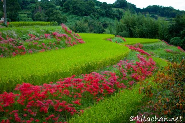 明日香稲渕の棚田