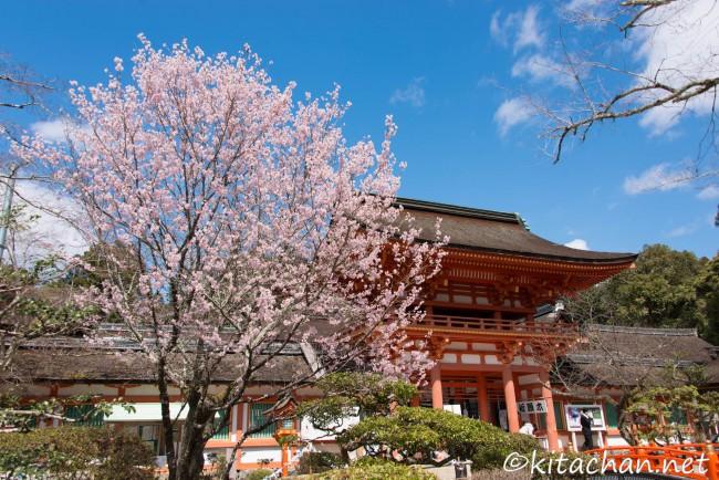 [PHOTOLOG] 2016年3月 京都の枝垂桜