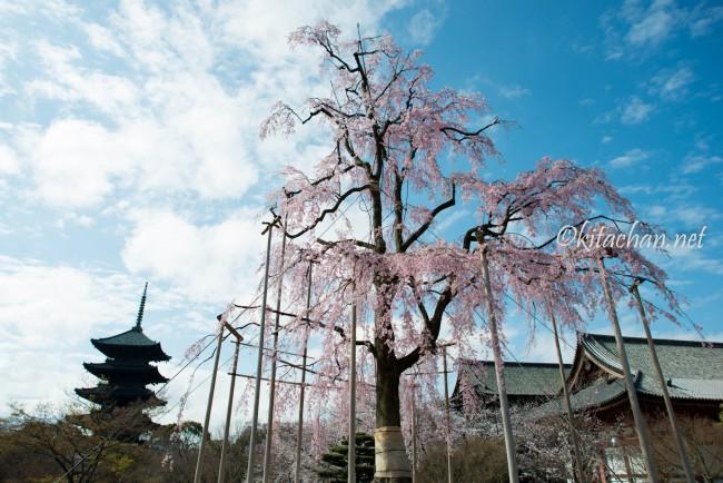 [PHOTOLOG] 2016年4月 京都の桜