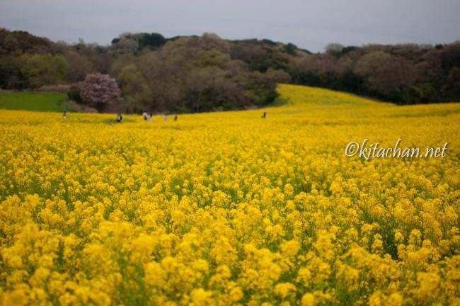[PHOTOLOG] 2016年4月 あわじ花さじき・明石海峡公園