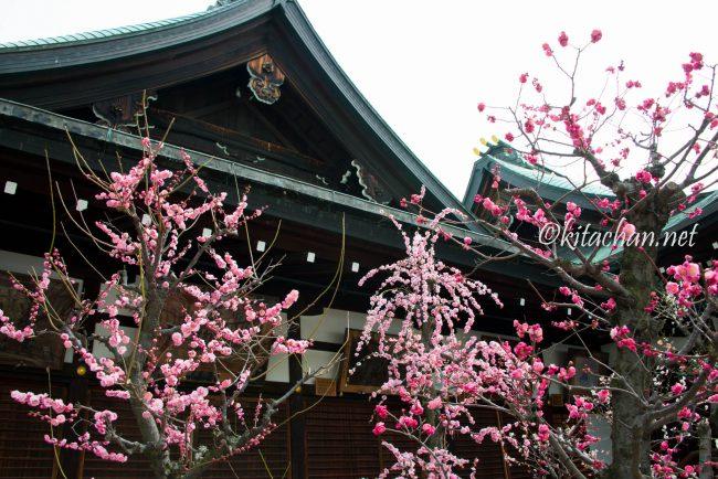[Photolog] 2017年3月 大阪天満宮の梅